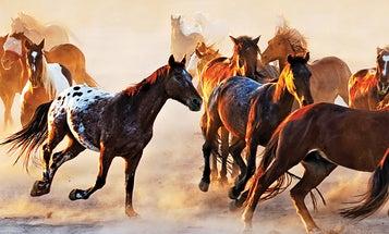 Photo Challenge Winner: Andrei Stoica's Majestic Horses