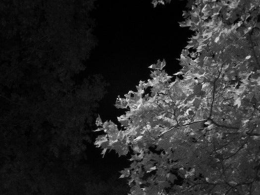 midnight01.jpg