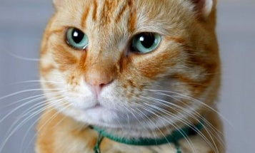 Cat Photographer Takes Facebook, Seattle Art World By Storm
