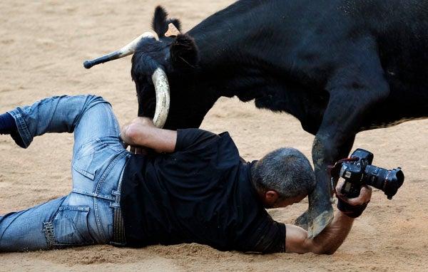 """bulls"""