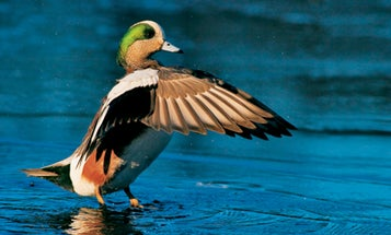 10 Tips for Dynamic Waterfowl Photos