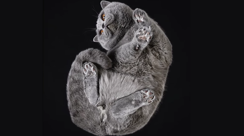 One photographer's fresh take on cat photography