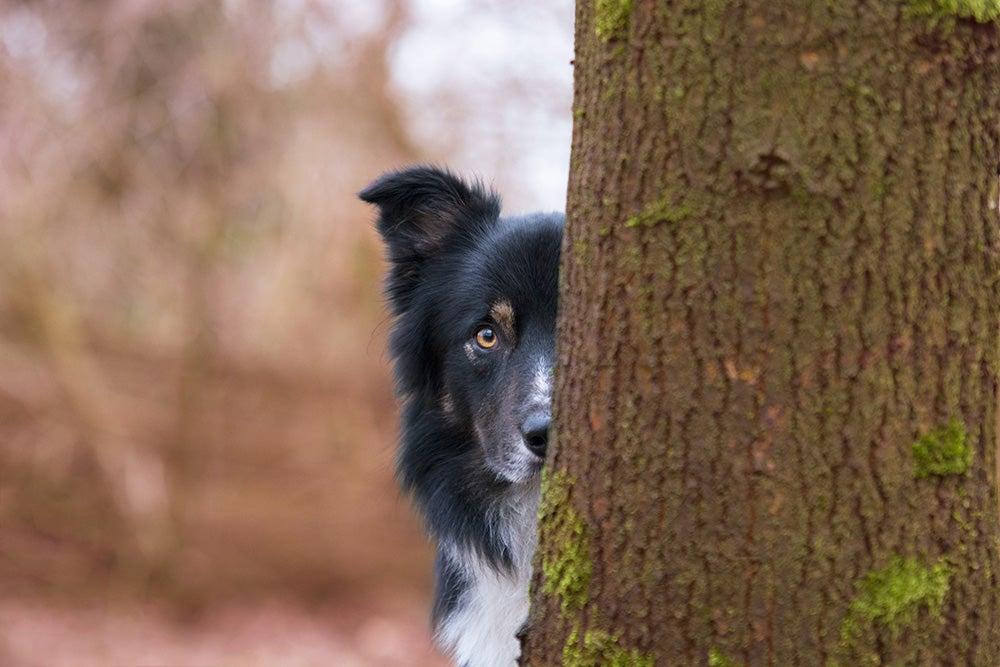 dog peeking from behind tree