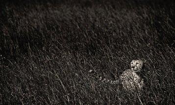 September Photo Challenge: Monochrome Animal Pictures