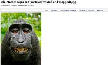 """PETA's Copyright Lawsuit About The """"Monkey Selfie"""" Feels Like Another Big Publicity Stunt [Update: The Monkey Lost]"""