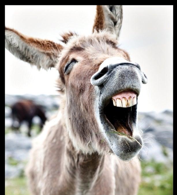 """""""Donkey"""""""