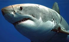 Photographing-Sharks