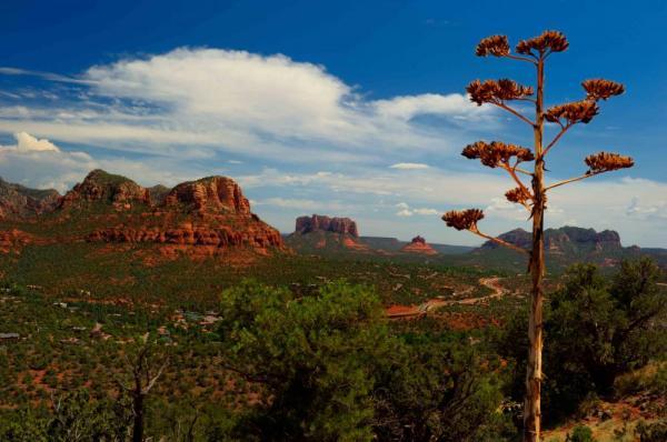 Mentor Series: Northern Arizona, Flagstaff & Sedona