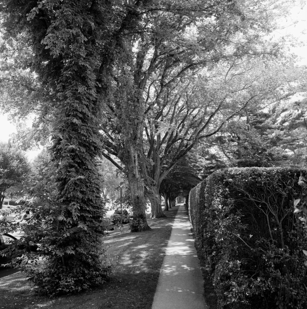 trees03.jpg