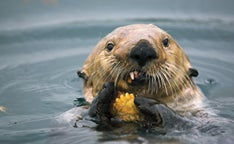 Otter Promo