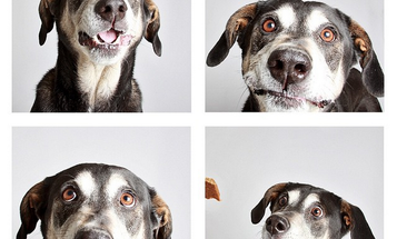 A Photo Booth for Dogs Gets Pets Adopted Faster