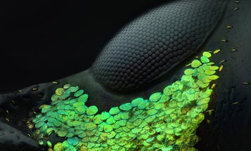 Larger than life photos of tiny things