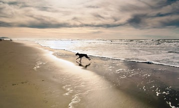 Reader Gallery: 53 Awesome Photos of Dogs