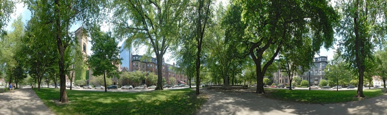 trees04.jpg