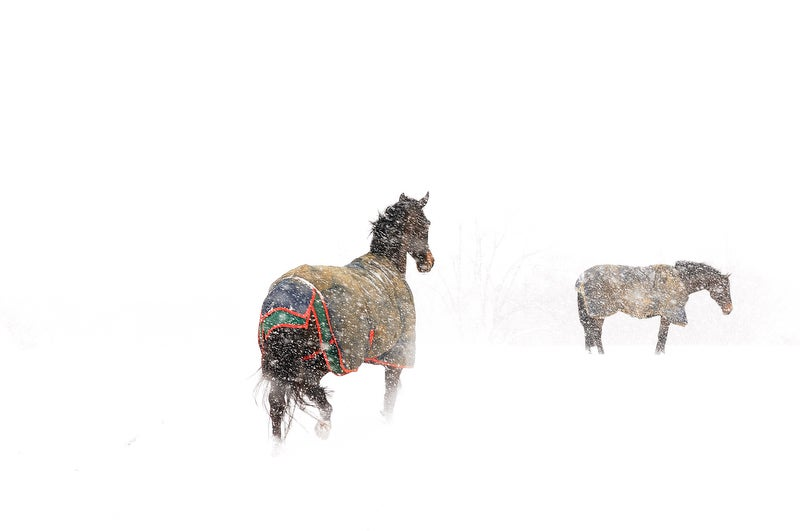 horsessnow.jpg