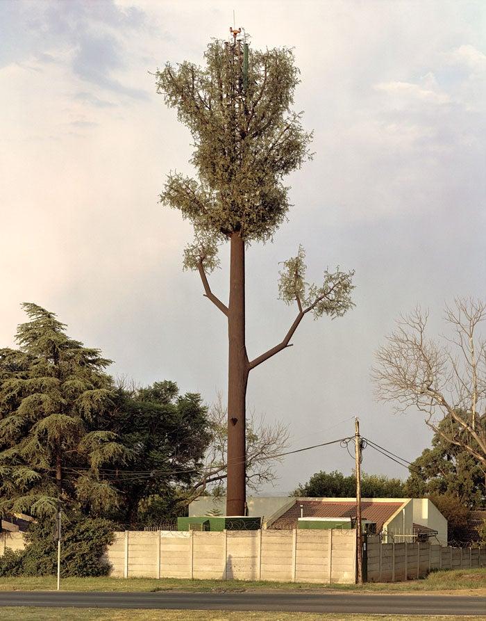 applatisctrees02.jpg