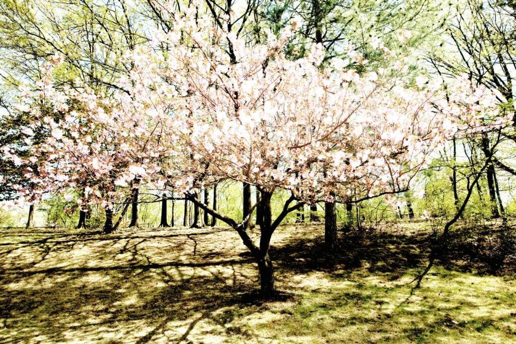 trees11.jpg