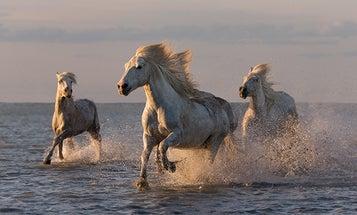 Carol Walker's Tips for Taking Majestic Horse Photographs