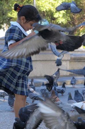 """Olympus-E-3-Field-Report-A-little-girl-a-flock-o"""