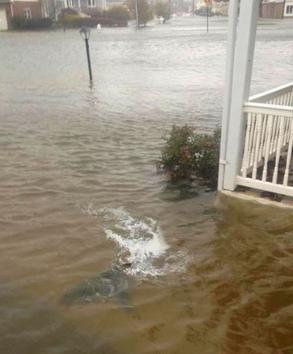 fake sandy shark