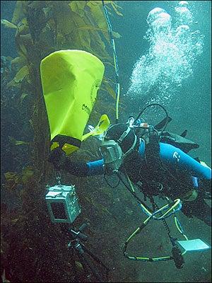 """""""Yemaya-Underwater-Camera-Belger-shoots-with-Yem"""""""