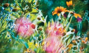 Behind the Photos: Magda Wasiczek's Surreal Floralscapes
