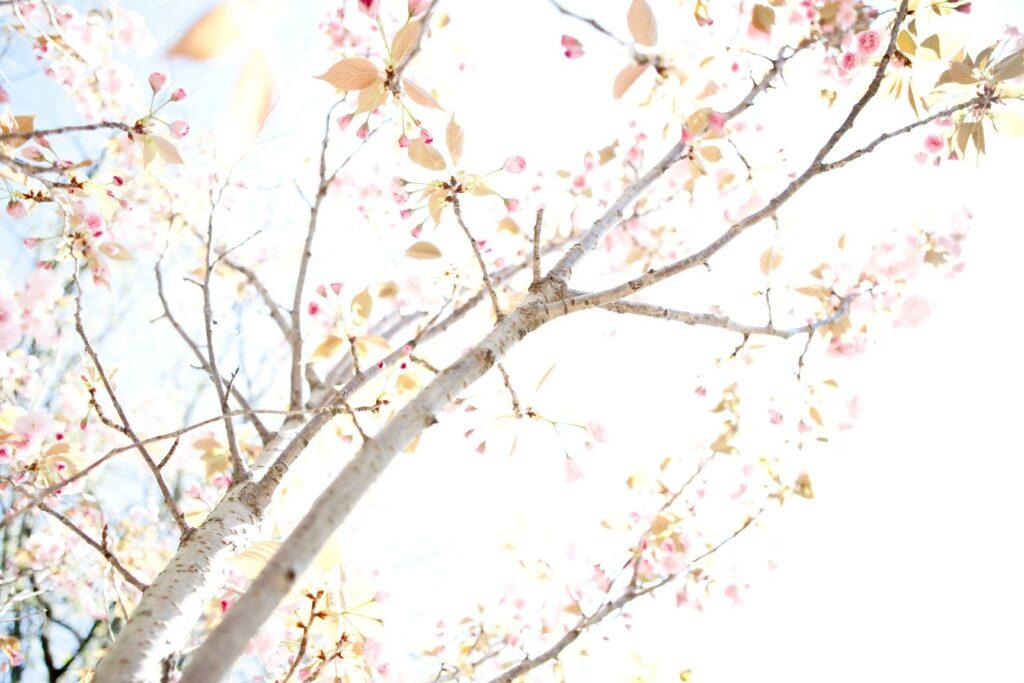 trees12.jpg