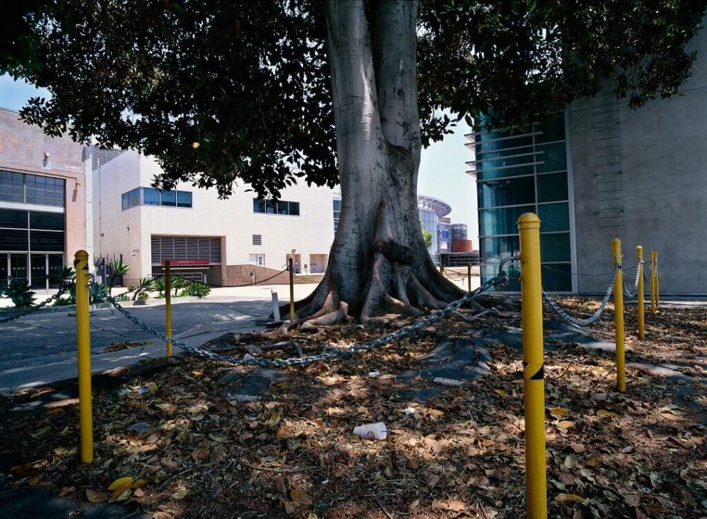 trees15.jpg