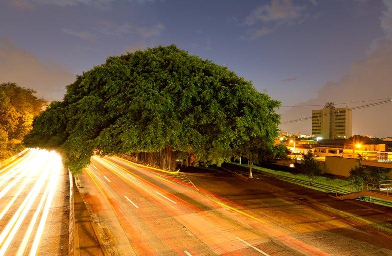 trees06.jpg