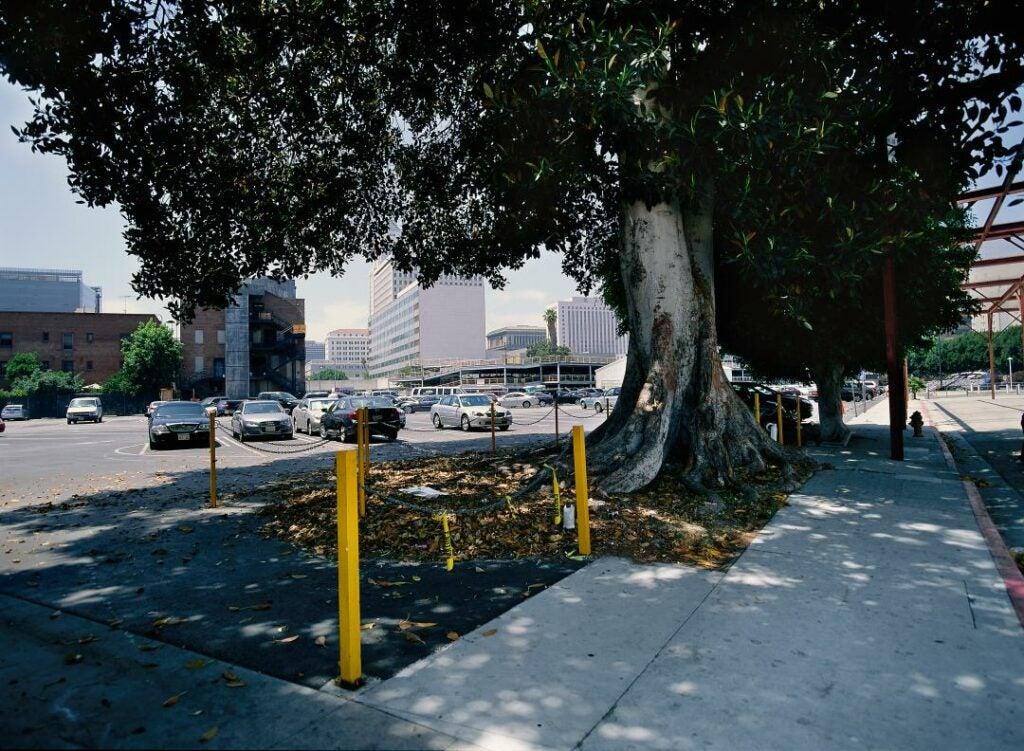 trees14.jpg