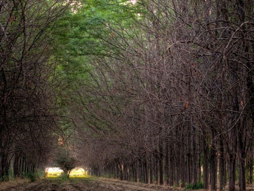 trees29.jpg