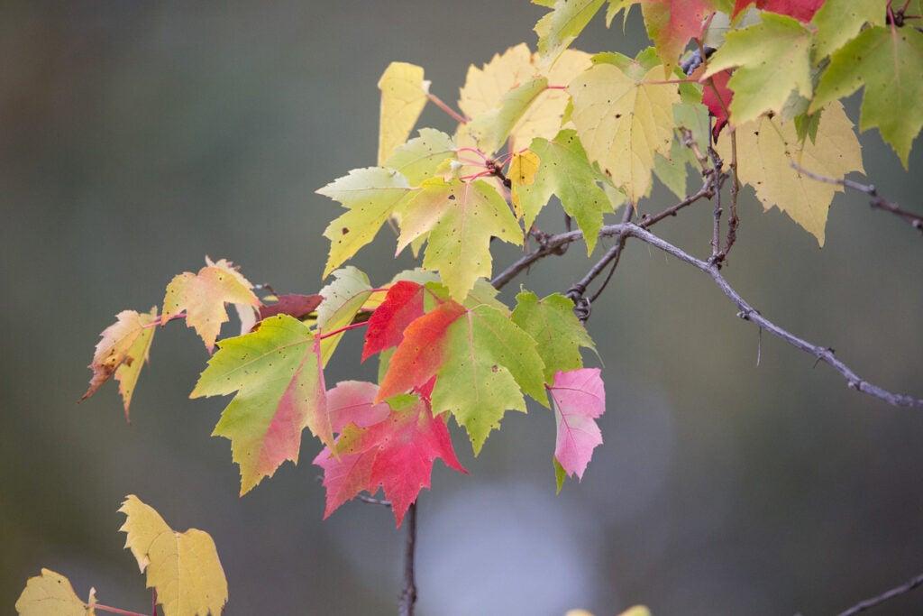 """Foliage"""