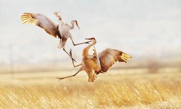 The 2015 Audubon Photography Awards Winners Demonstrate the Beauty of Birds