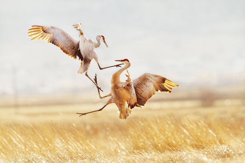 Audubon Photography Awards