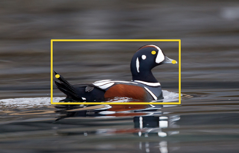 This Clever Software Can Automatically Identify The Birds In Your Photos