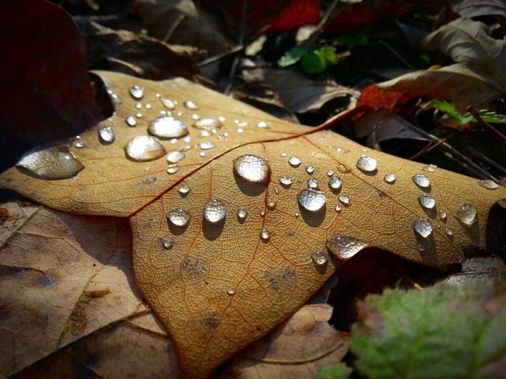 """Rain"