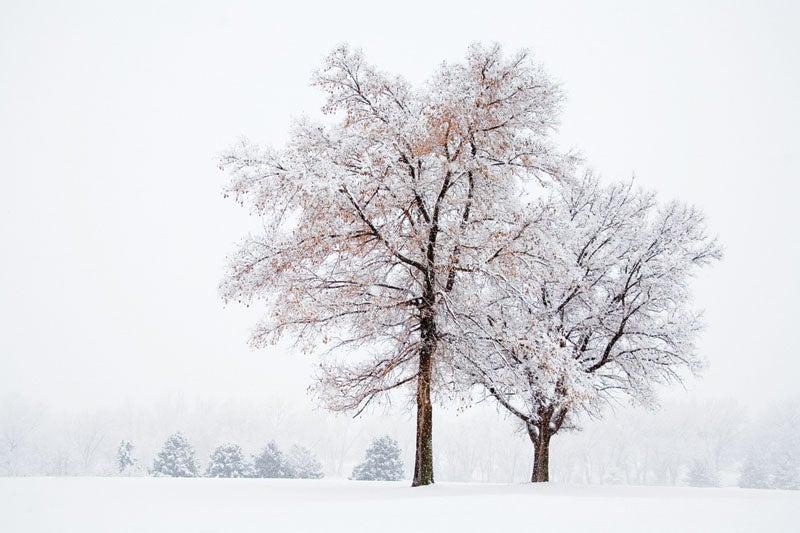 blizzard05.jpg