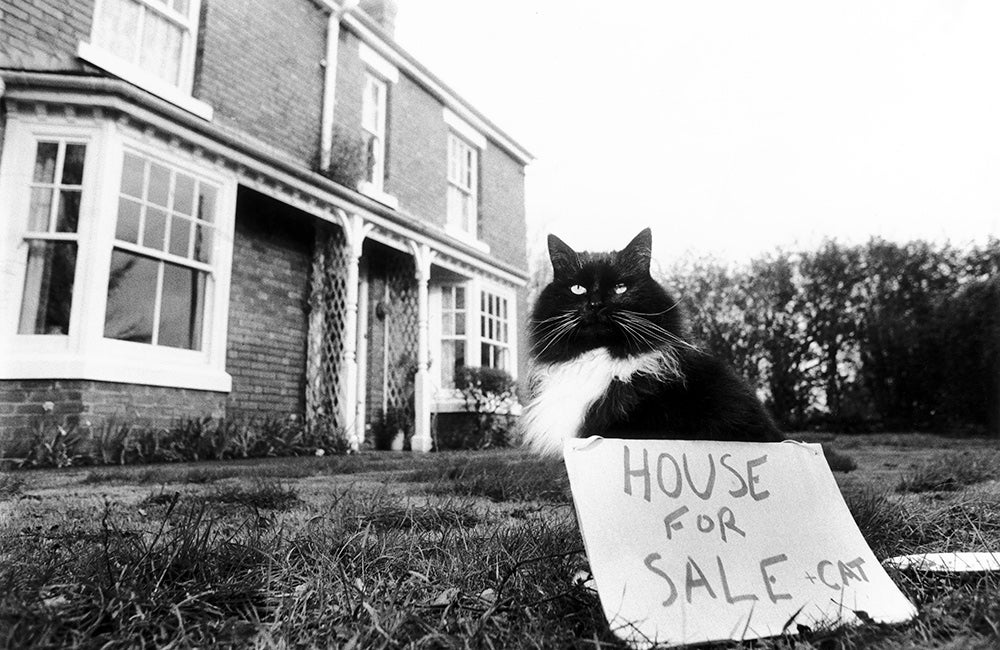 house for sale with cat