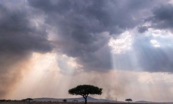 Mentor Series: Darlene Gillespie Explores the Serengeti
