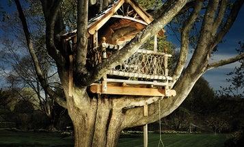 Backstory: A Dreamy Treehouse