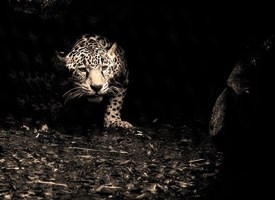 """Leopard"