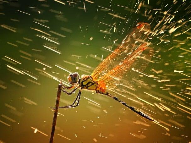 dragonfly2
