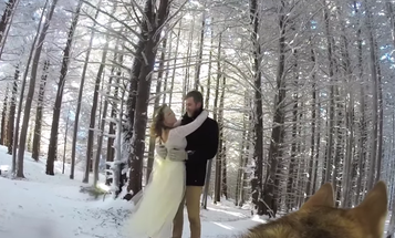 This Is What Happens When You Use a GoPro to Make a Dog Into a Wedding Videographer