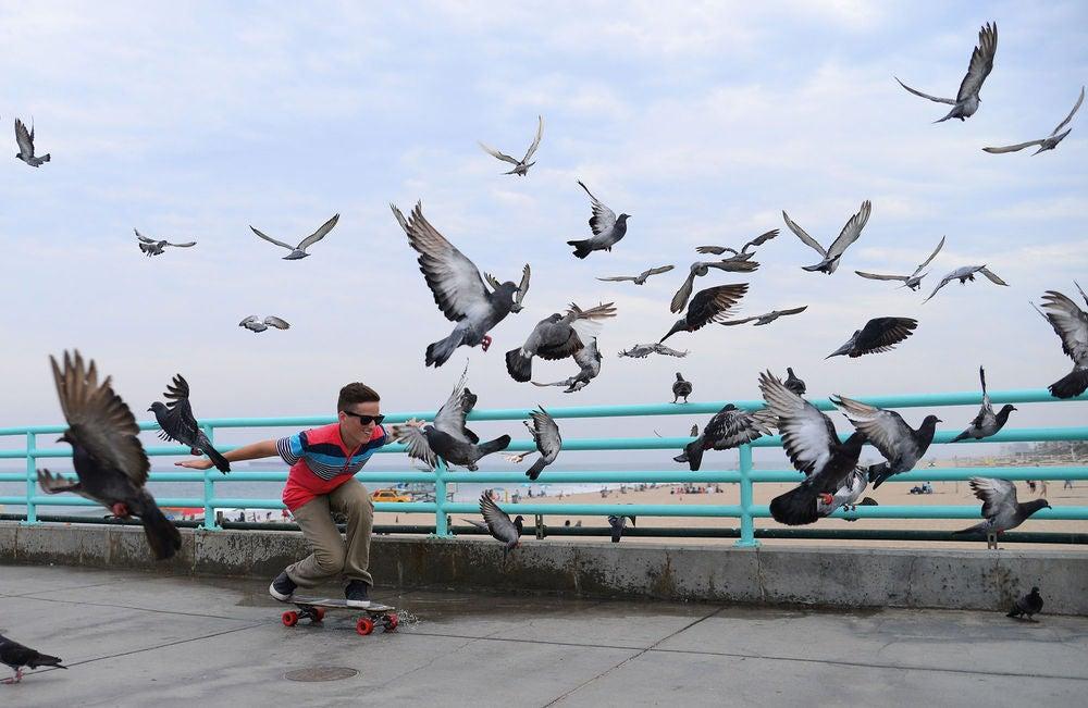 """Popbirds"""