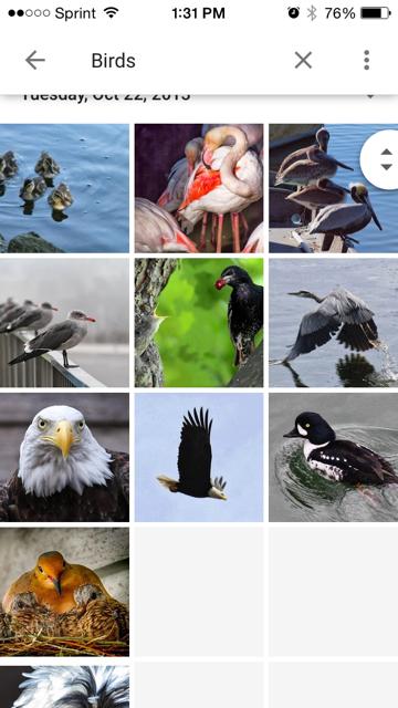 search function bird photos