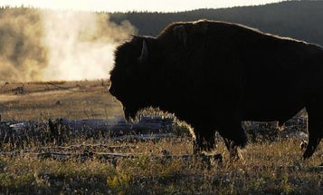 Mentor Series: Montana & Yellowstone National Park