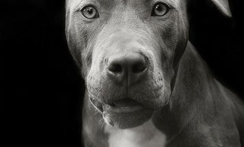 Point of View: Photographer Traer Scott Rescues Dogs With Her Camera