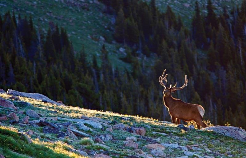 naturespotlight02.jpg