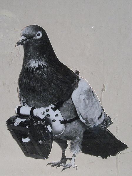 pigeoncams