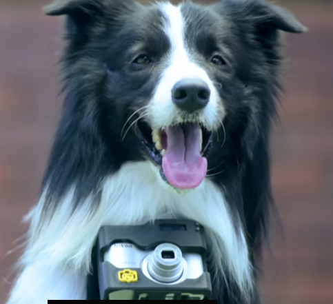 Nikon's Dog Camera Mount Takes a Photo When Your Pup's Heart Rate Goes Up